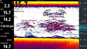 Pesci in caccia ripresi con Simrad S2016 e Tm150