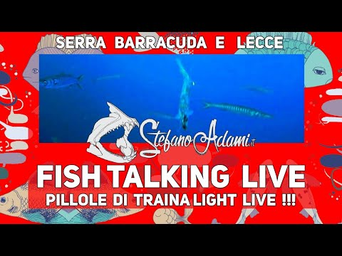 Pillole di traina col vivo Light LIVE pesca al serra, barracuda, palamita e molto altro