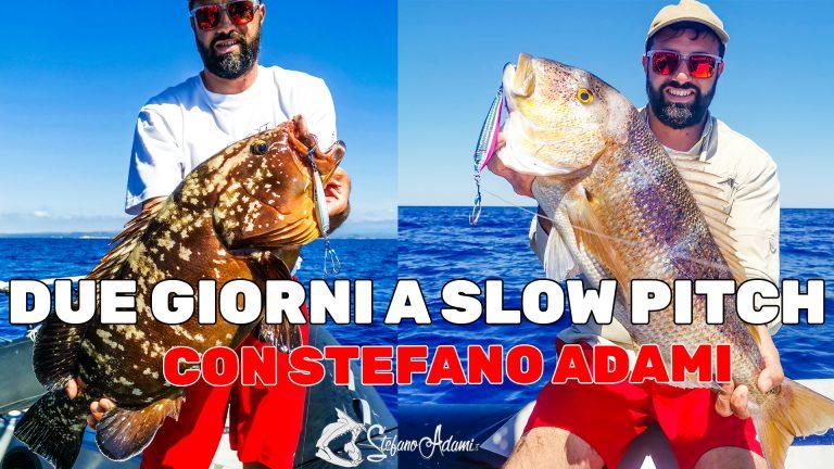 Due giorni di Slow pitch Jigging con Stefano Adami a Palau, tra dentici e cernie