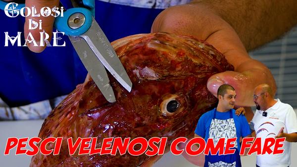 Come rendere innocui i pesci pericolosi Golosi di mare EP 10