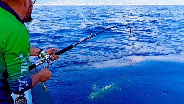Pesce spada in canna Stefano Adami